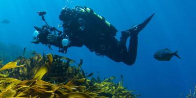 The Weedfish